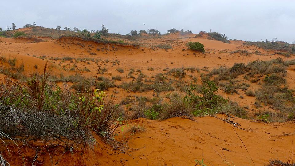 St-Lucia dunes