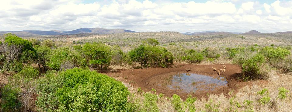 Thanda waterhole